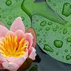 Floral Aquatic